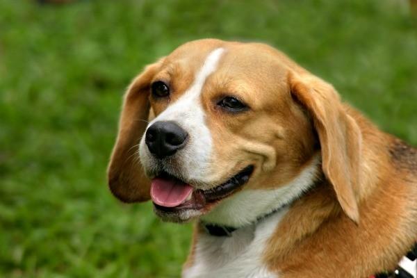 Best Small Mix Dog Breeds