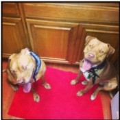 Two tan dogs sitting on red floor mat in kitchen.