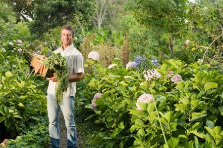 Man in his Vegetable and Flower garden