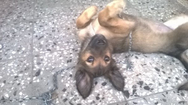 Puppy lying upside down.