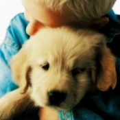 Comforting Puppy