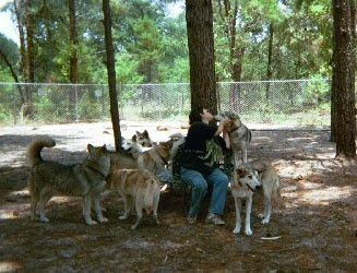 Woman sitting surrounded by wolves.