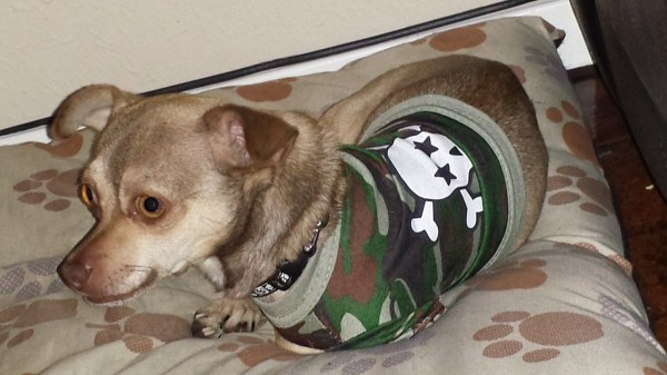 Chi lying down wearing a skull and crossbones sweater.