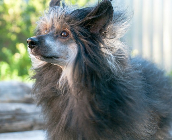 Natural hair growth remedies for dogs