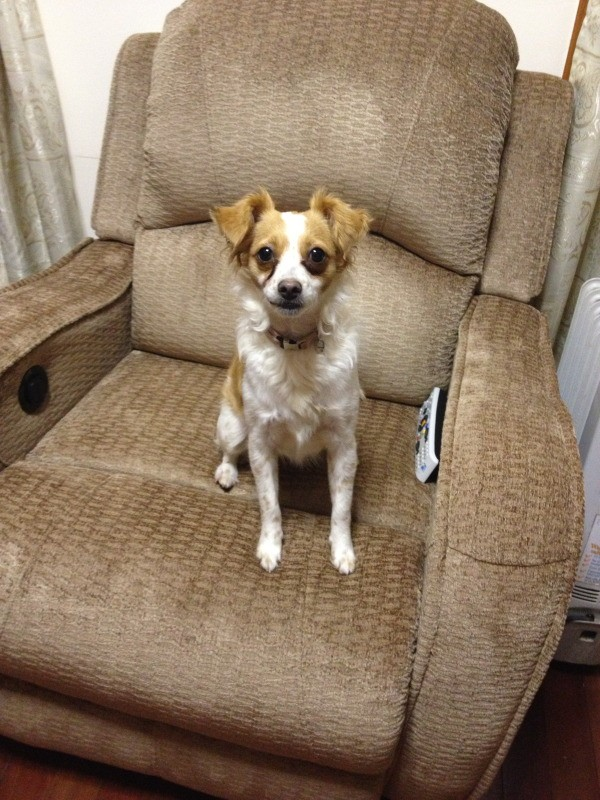 Dog on chair.