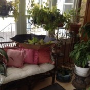 Umbrella open upside down under houseplants.
