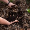 Lazy Gardening for Healthy Yards