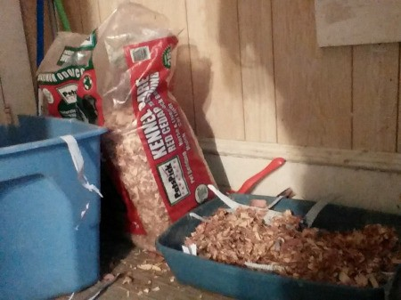 Cedar Shavings as Kitty Litter Alternative