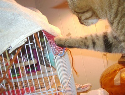 Cat pawing at cage.