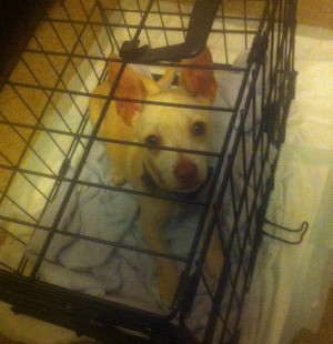 small dog in crate