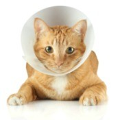 A cat wearing a cone on its head.