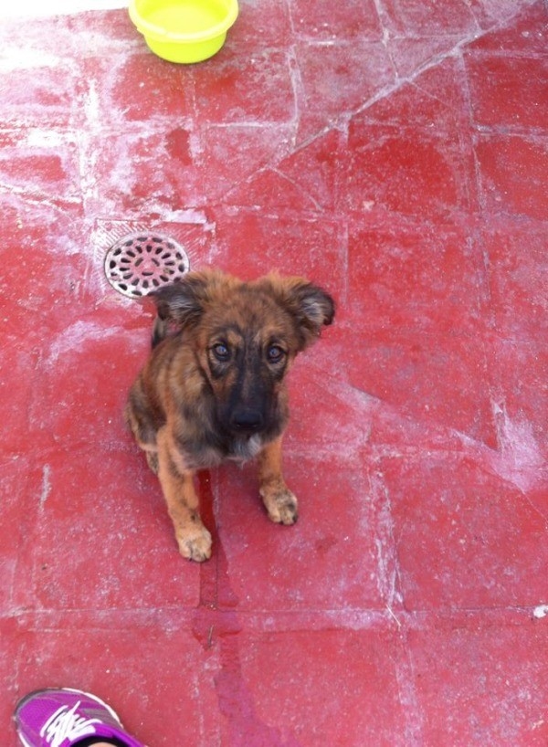 Black and brown puppy on red tile patio.