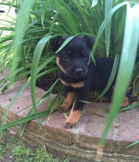 Puppy in planter.