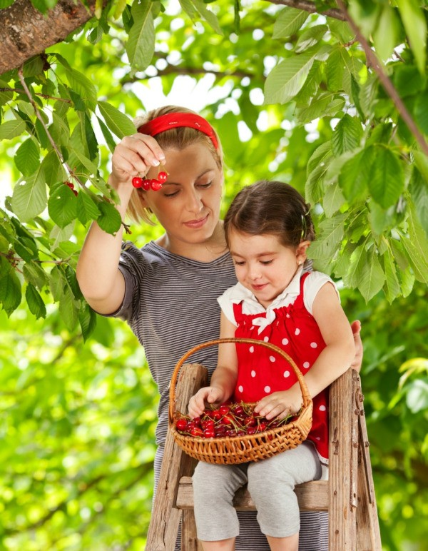 A mother and daughter picking cherries.