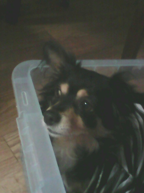 Dog lying in a plastic bin.