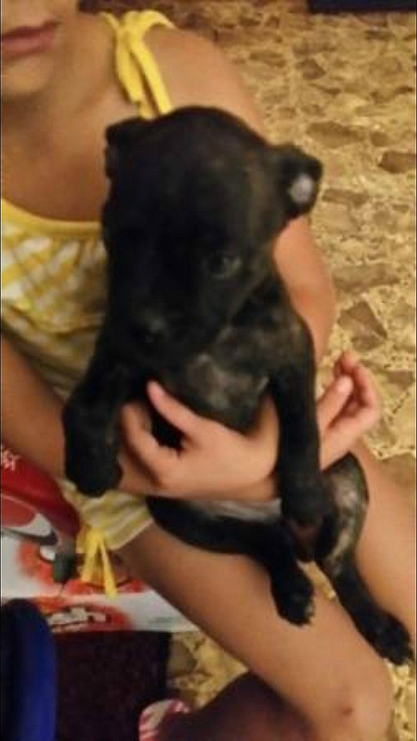 small black puppy