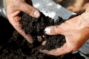 A person looking at soil.