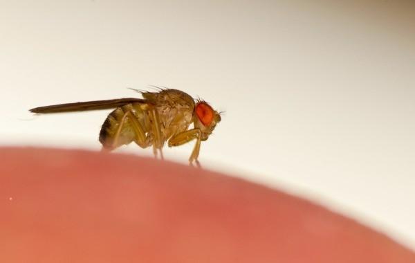 Do Fruit Flies Bite? | ThriftyFun