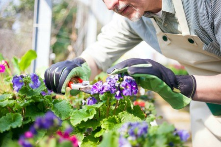 man pruning a flowering plant