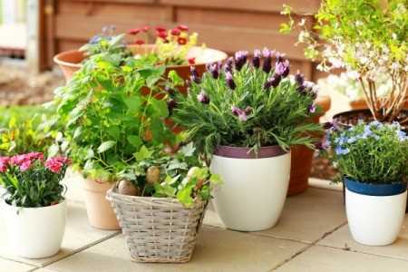 Plants in Containers