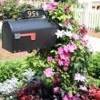 flowering vines on mailbox