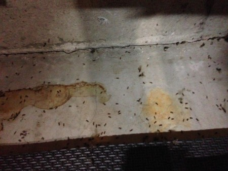 Ants in my garage