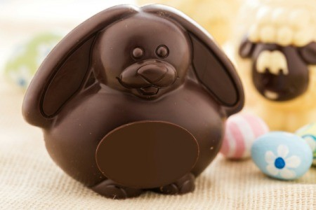 cute roundish chocolate bunny