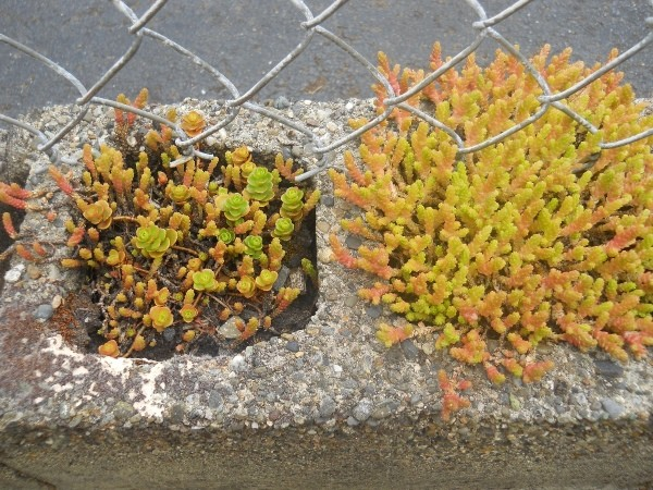 Planting Succulents In A Cinderblock Wall ThriftyFun