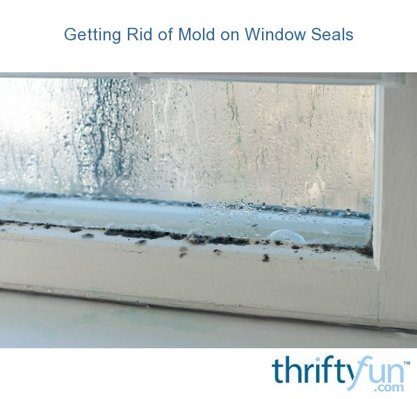how to clean mold from window seals