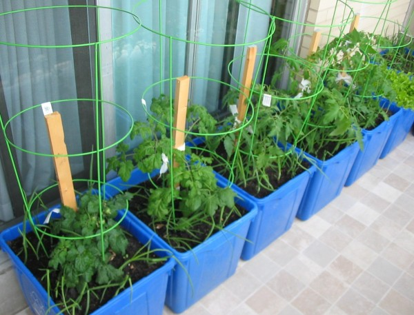 Growing vegetables in containers thriftyfun - Soil for container vegetable gardening ...