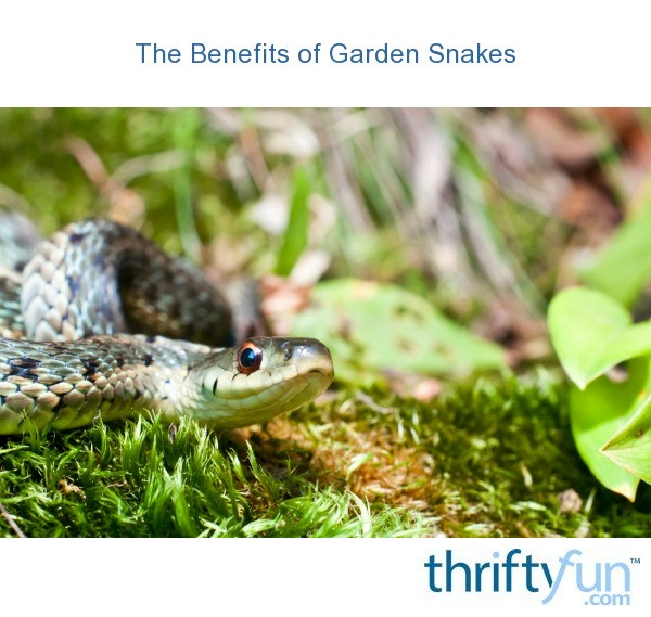 The Benefits Of Garden Snakes Thriftyfun