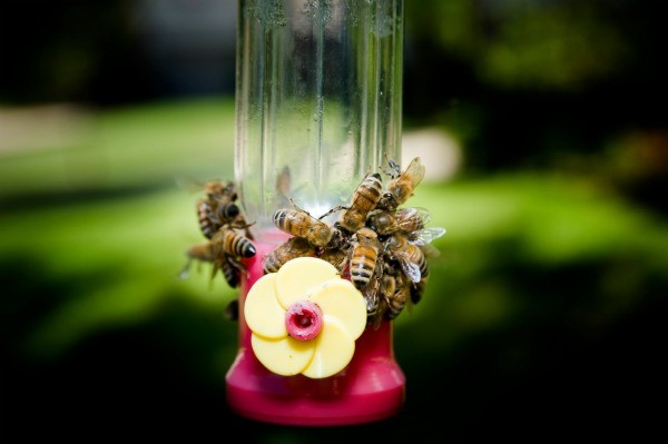 Hummingbird Feeder With Bees