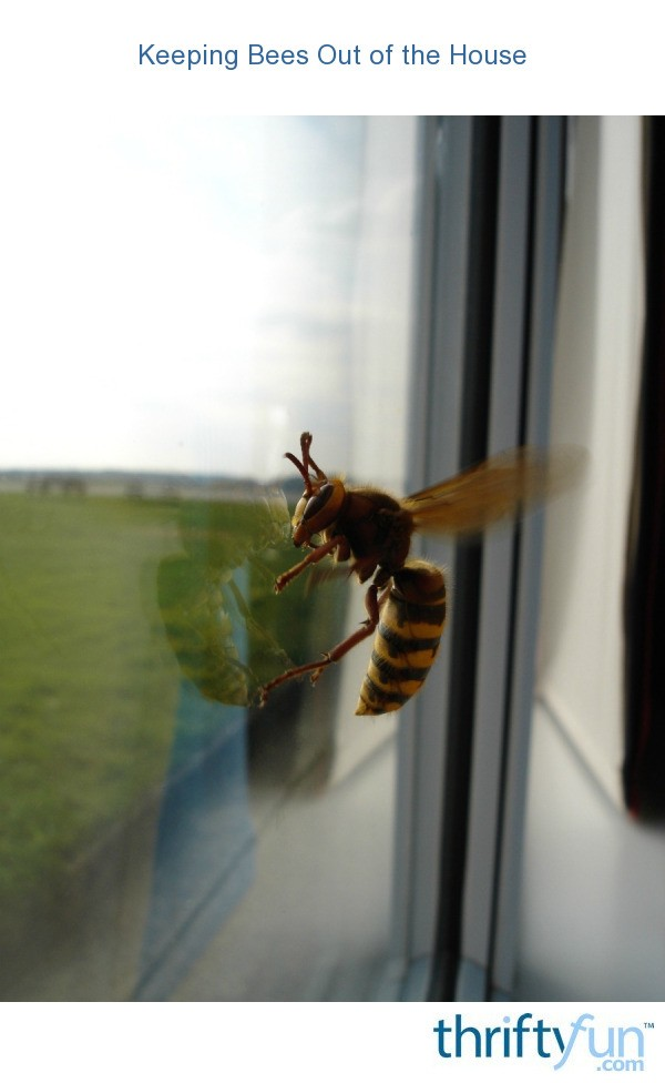 Keeping Bees Out Of The House Thriftyfun