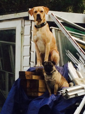 Pug and larger dog on stack of building supplies