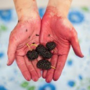berry stains on hands