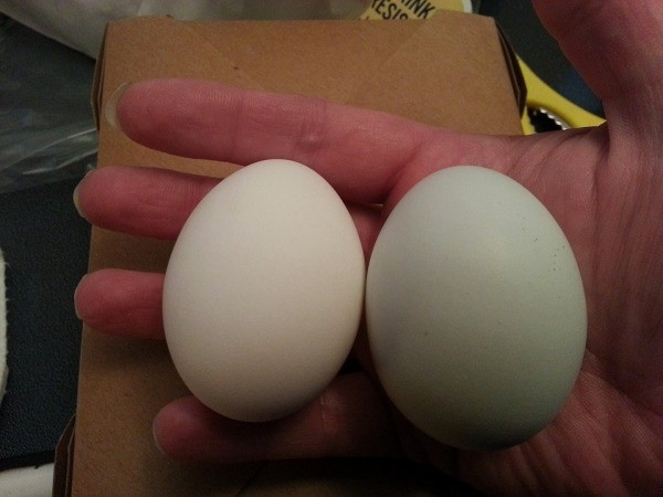 white and green egg