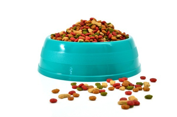 How To Keep Flies Off Dog Food