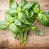 Recipes Using Fresh Basil