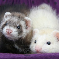 how to make your own ferret cage