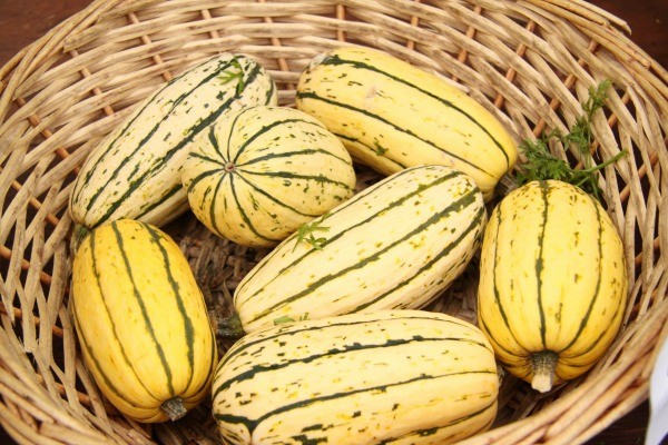 basket of sweet potato squash
