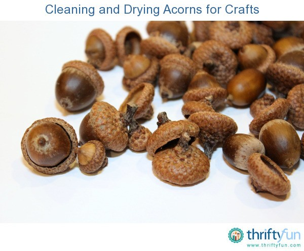 Cleaning and drying acorns for crafts thriftyfun for How to preserve acorns for crafts