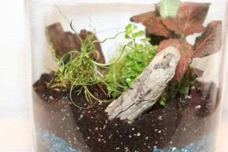 wood in terrarium
