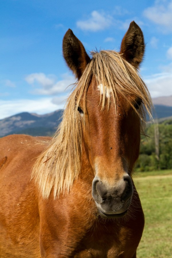 Treating Bumps on Horse's Face | ThriftyFun