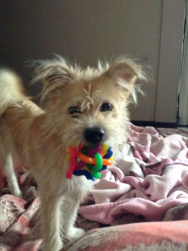 puppy with colorful toy