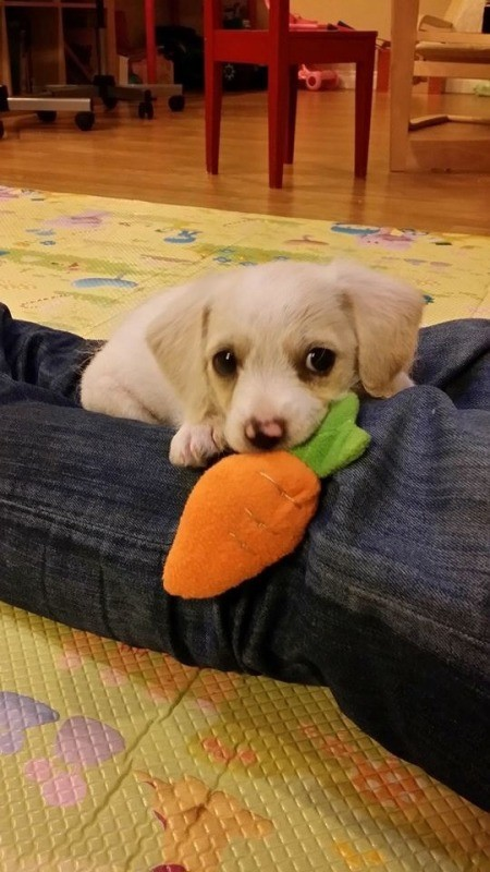 holding carrot toy