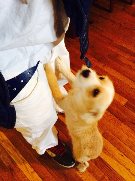 yellow pup standing on hind legs