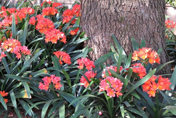 bright orange flowers under a pine tree