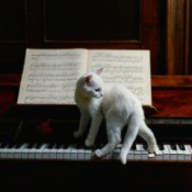 white cat on piano