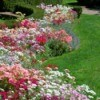 curved flower beds