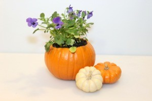 Mini Pumpkin Planter